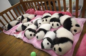 【画像】動物の子供達