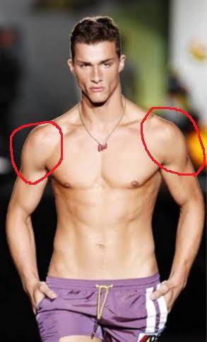 好きな筋肉の部位