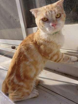 猫はなぜあんなに可愛いのかとことん考えるトピ