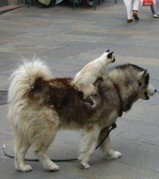 犬の可愛いエピソードが聞きたい