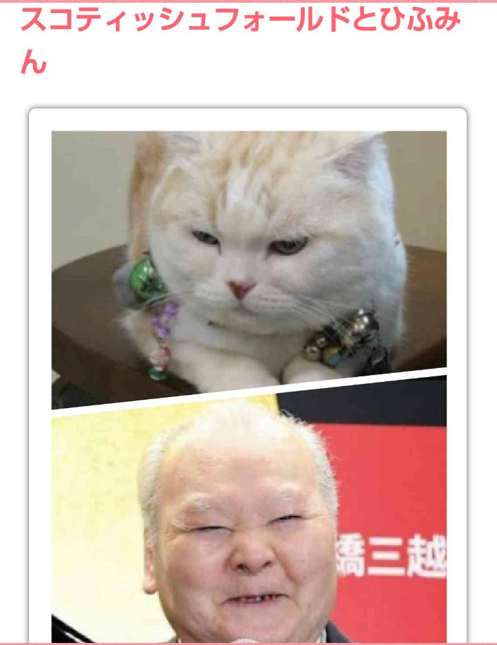 猫顔といえば?