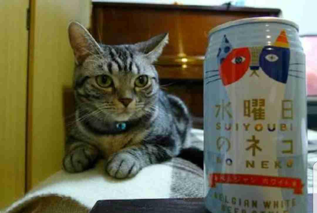 最近お気に入りの缶ビールや缶チューハイ