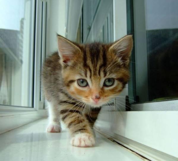 甘えてる猫の画像