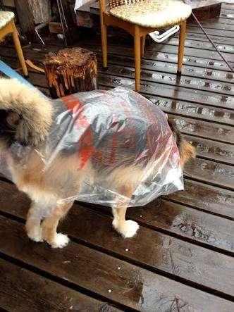 犬や猫に洋服、どう思いますか?