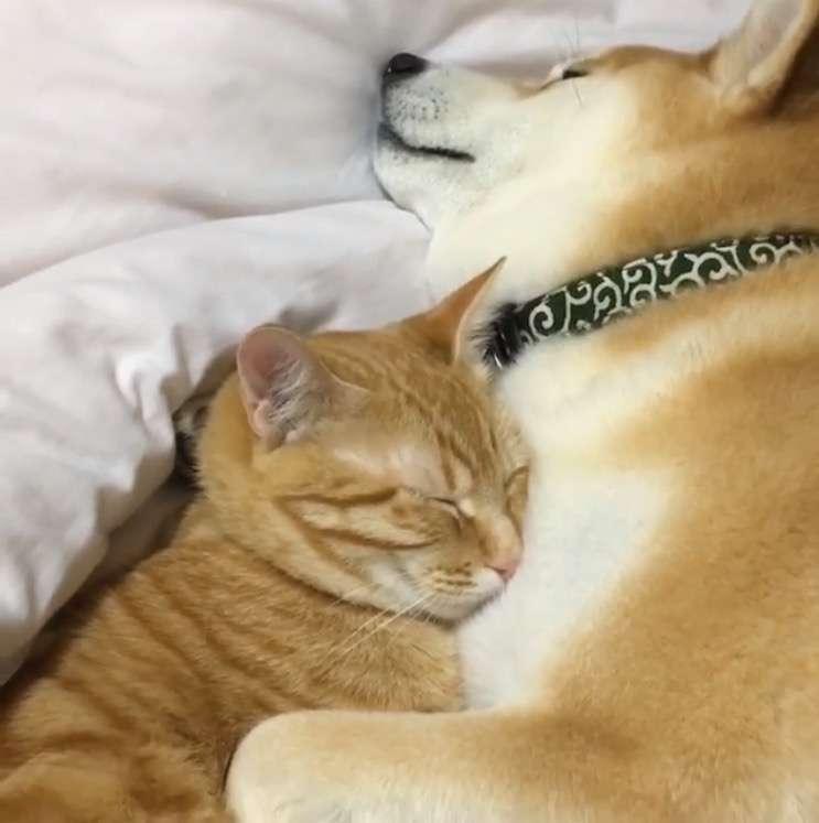犬も猫も両方飼ってる方!