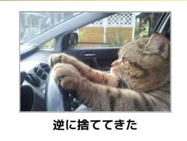 【画像】可愛いさ100点!何かやっている動物