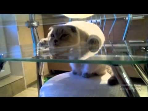 狭い場所にいる猫