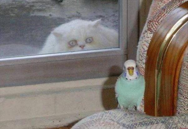 猫のgif画像を集めよう