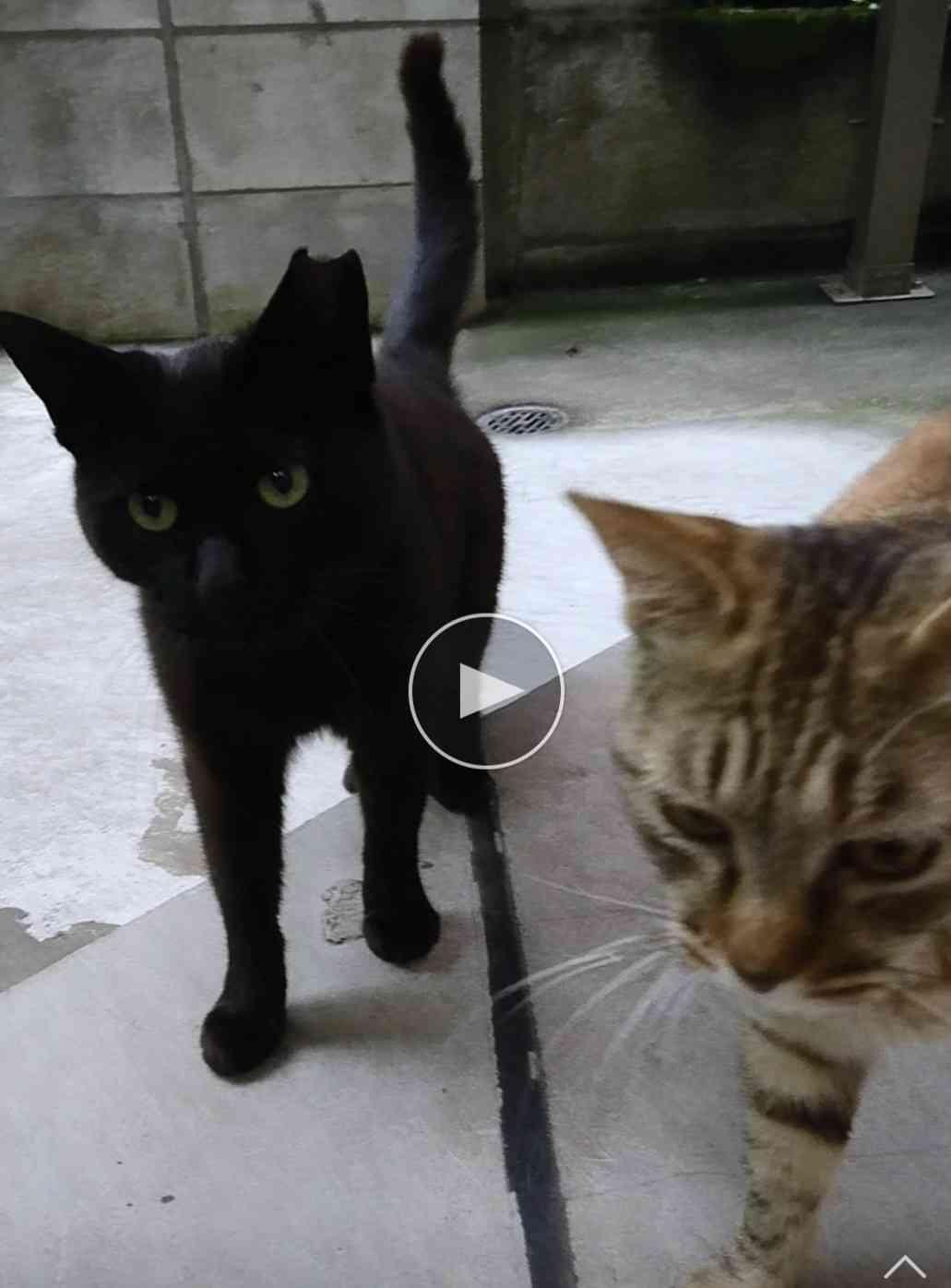 【本日】黒猫感謝の日!