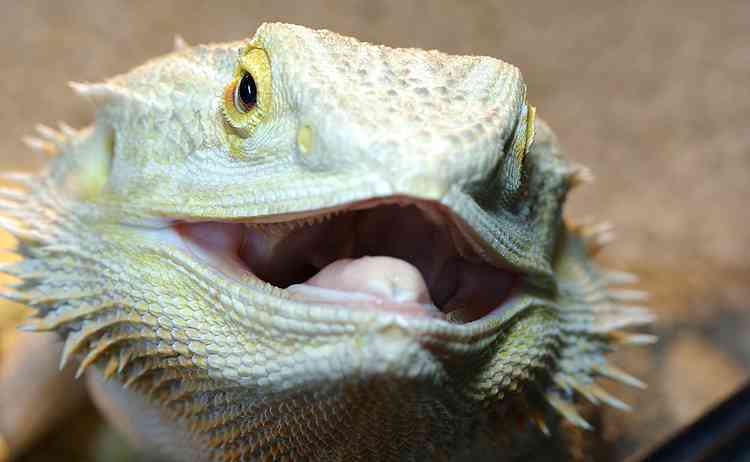 爬虫類顔の有名人