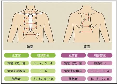 内科で胸の聴診の際