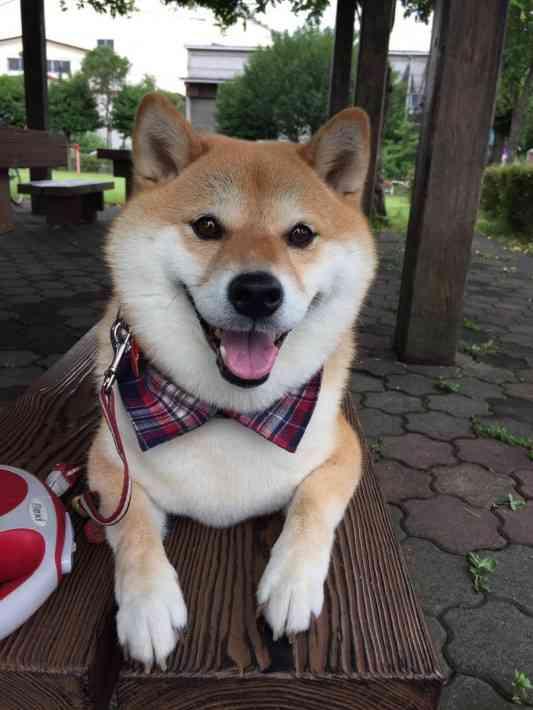 芸能界一!最強に可愛い犬系男子ランキング