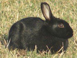 爪切り中、ウサギ骨折 獣医師に15万円賠償命令