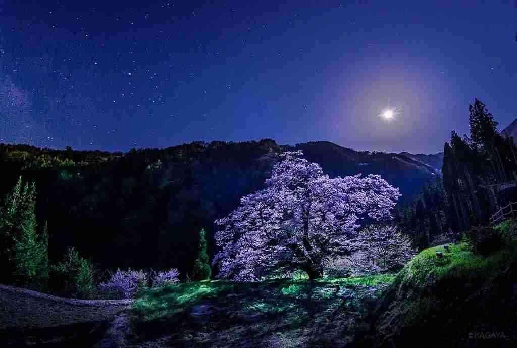 【寝る前に】穏やかな気持ちになる画像を見ておやすみなさい