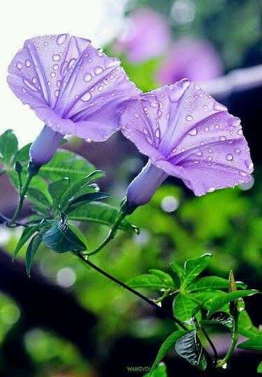 紫色が好きな人の集まるトピ
