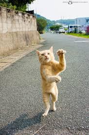 お祭りで盆踊り踊りますか?
