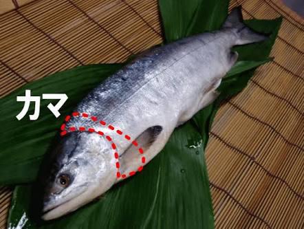 お魚何が好きですか?