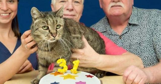 垂れ耳猫のスコティッシュフォールドがこの世から消える!? 動物愛護団体から残酷との声