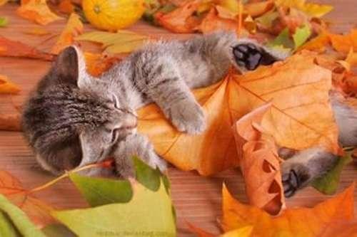 秋になると寂しくなりませんか?
