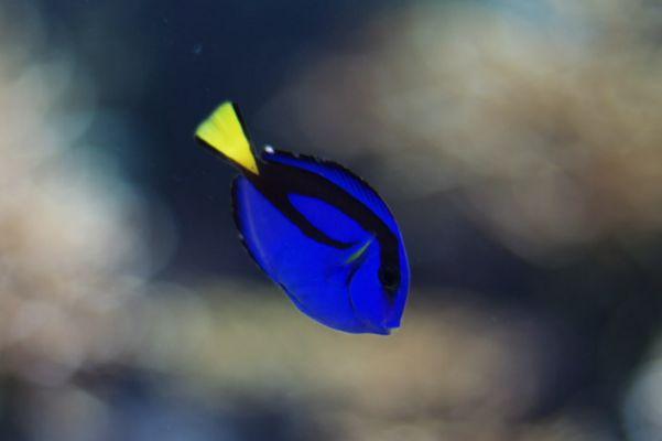 青魚が好きな人