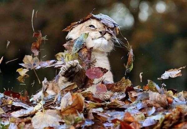 秋色が似合わない人!