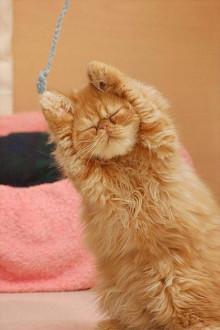 いつもニコニコしてる人って疲れないんですか?
