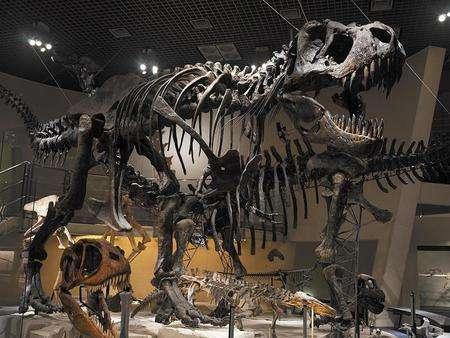 地層 石 化石に興味がある人