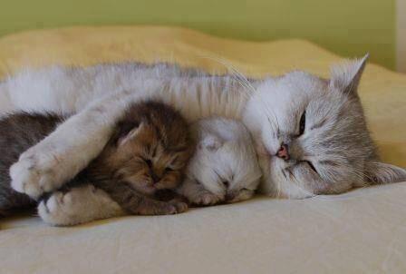 【画像】動物の寝顔zzZ