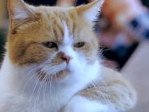 猫の世界にがるちゃんがあったら立ちそうなトピpart2
