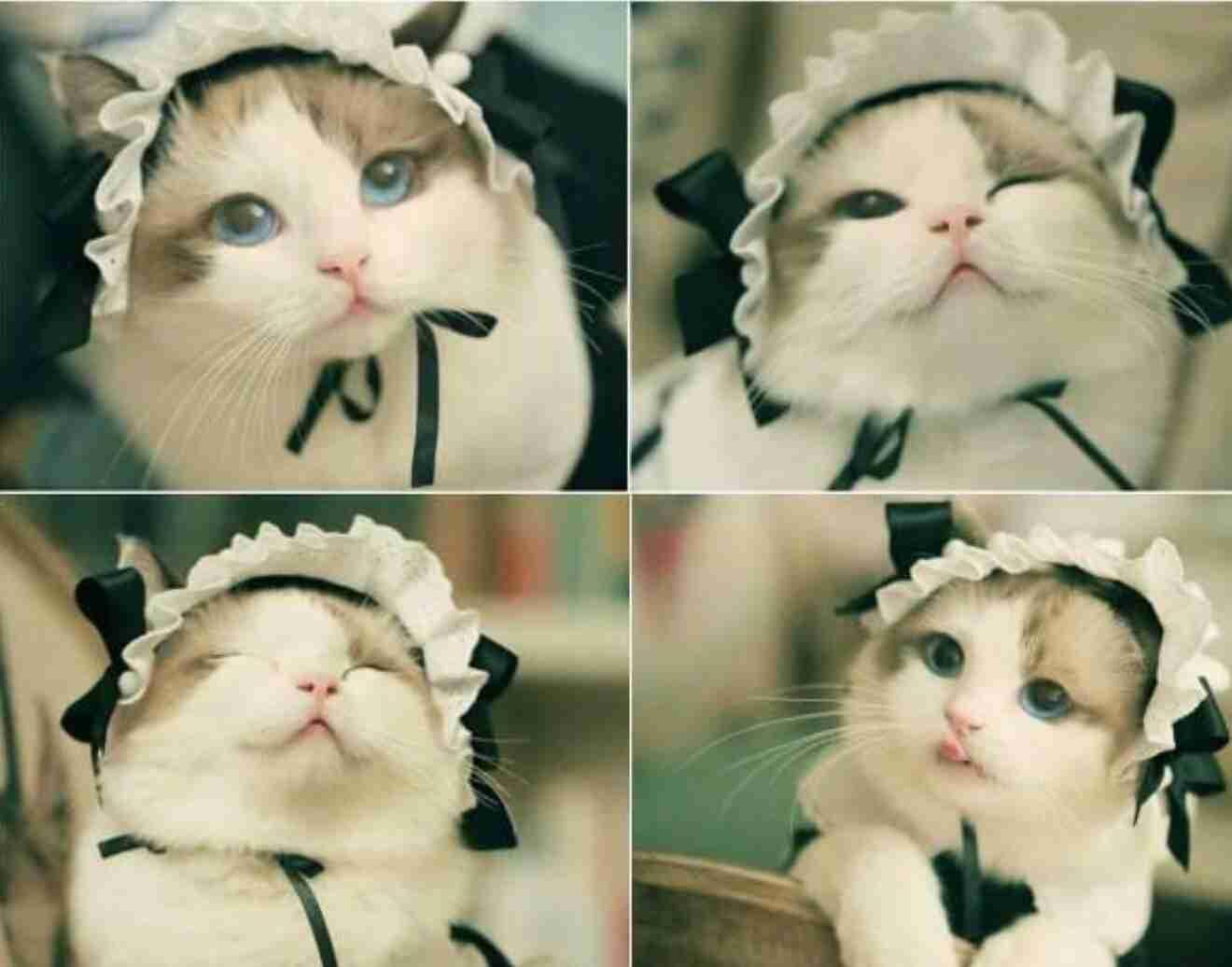 月曜日の朝を体現する猫、現る おもちゃで遊ぶ様子が「めんどくさい」「だるい」しかない