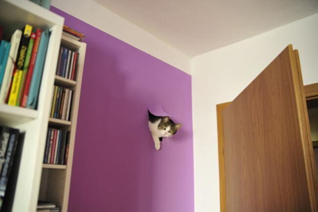 こんなところに猫が!って画像を貼っていくトピ