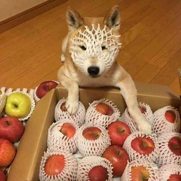 愛犬に与えているドッグフードを教え合いたい!