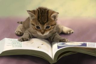 読書をし始めて変わったこと。