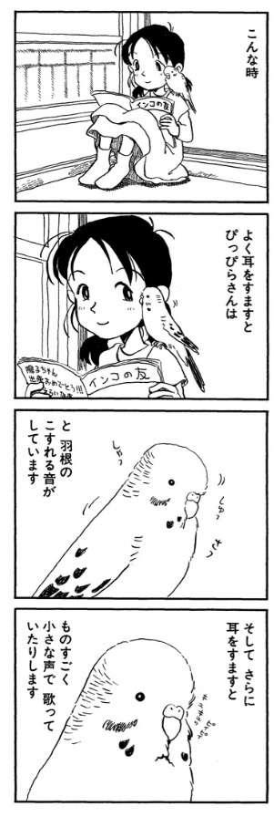 セキセイインコ飼ってる方【セキセイインコ限定】