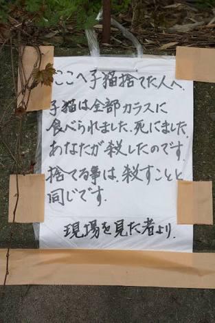 拡散希望!「猫のご飯が足りません」猫の楽園『青島』が寄付を呼びかけ