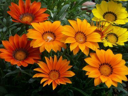 「秋の花」の画像を貼るトピ♪