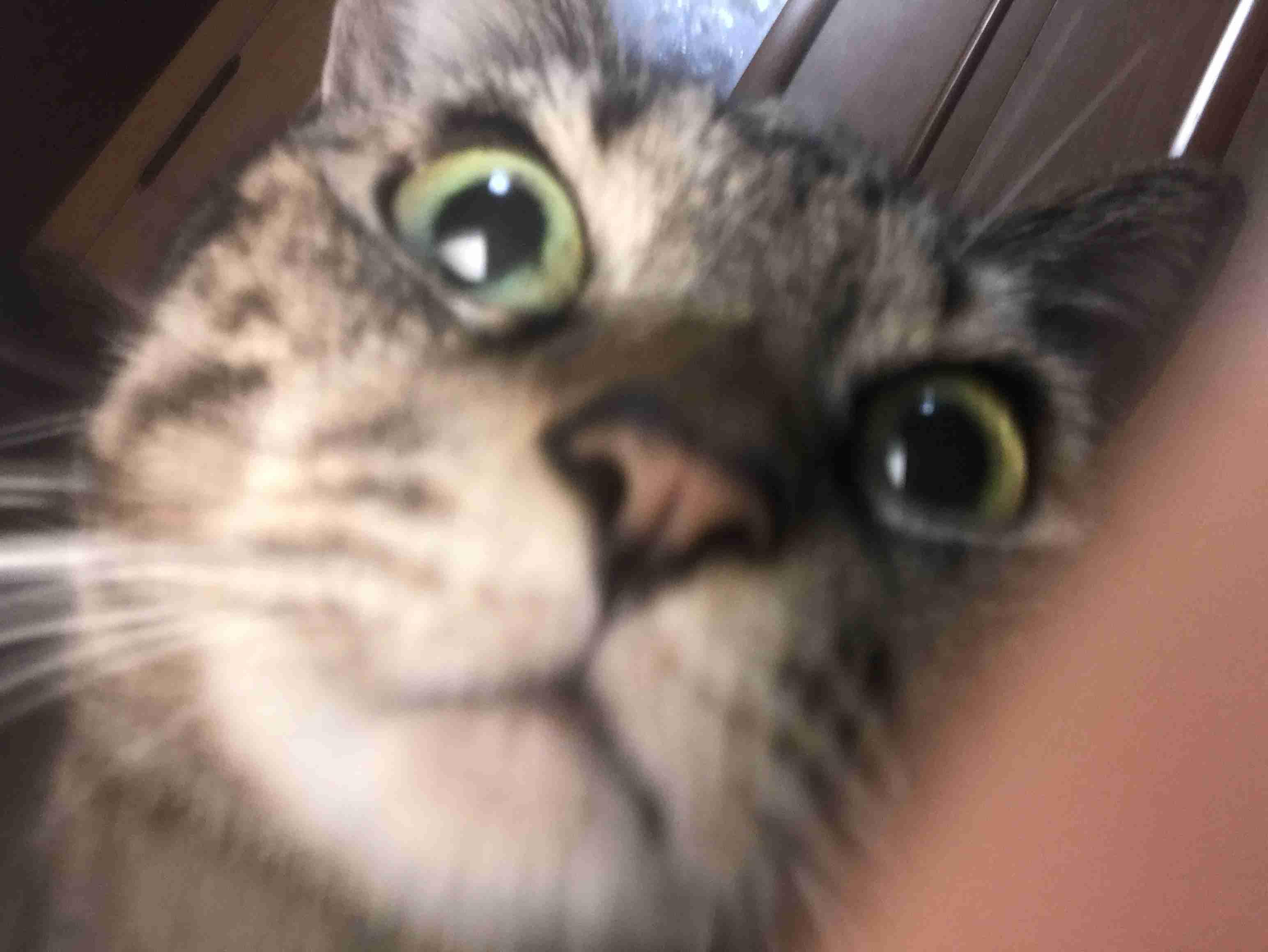 【ペット観察】いま、何をしていますか?