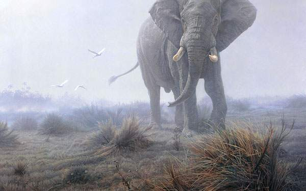 神々しい動物達の画像