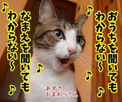 ペット、動物をテーマにした歌♪