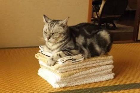 バスタオルってどれくらいで交換しますか?