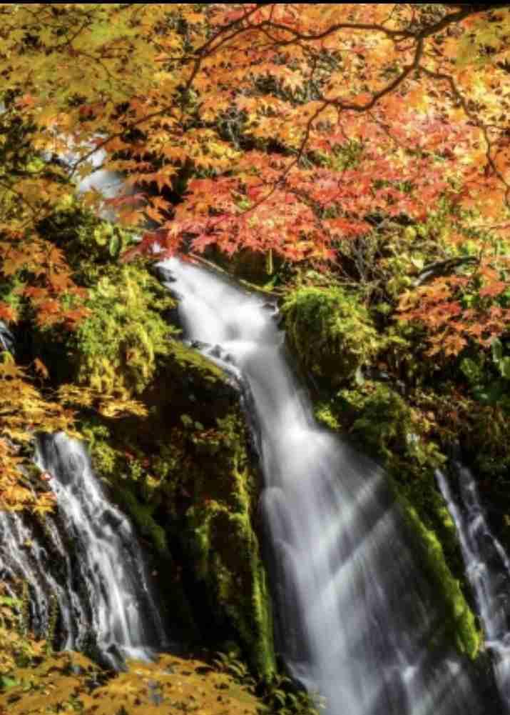 秋を感じさせる画像