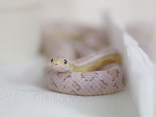 ヘビ顔男子好きな人!!2