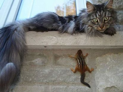 動物の写真を貼ったら誰かがそれにセリフを付けてくれるトピ
