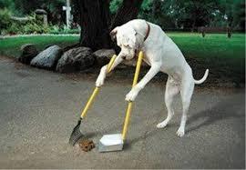 あなたの掃除の手順教えてください