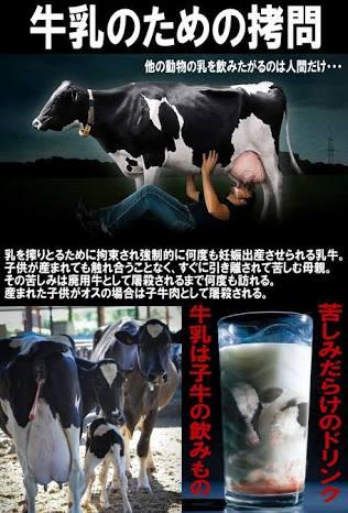 牛乳が大好きです