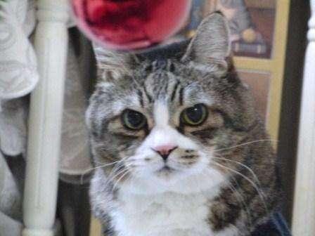 【画像】一番好きな猫の柄
