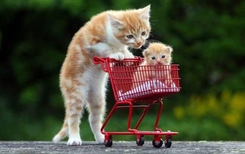 【動物部隊】ペット見守り隊