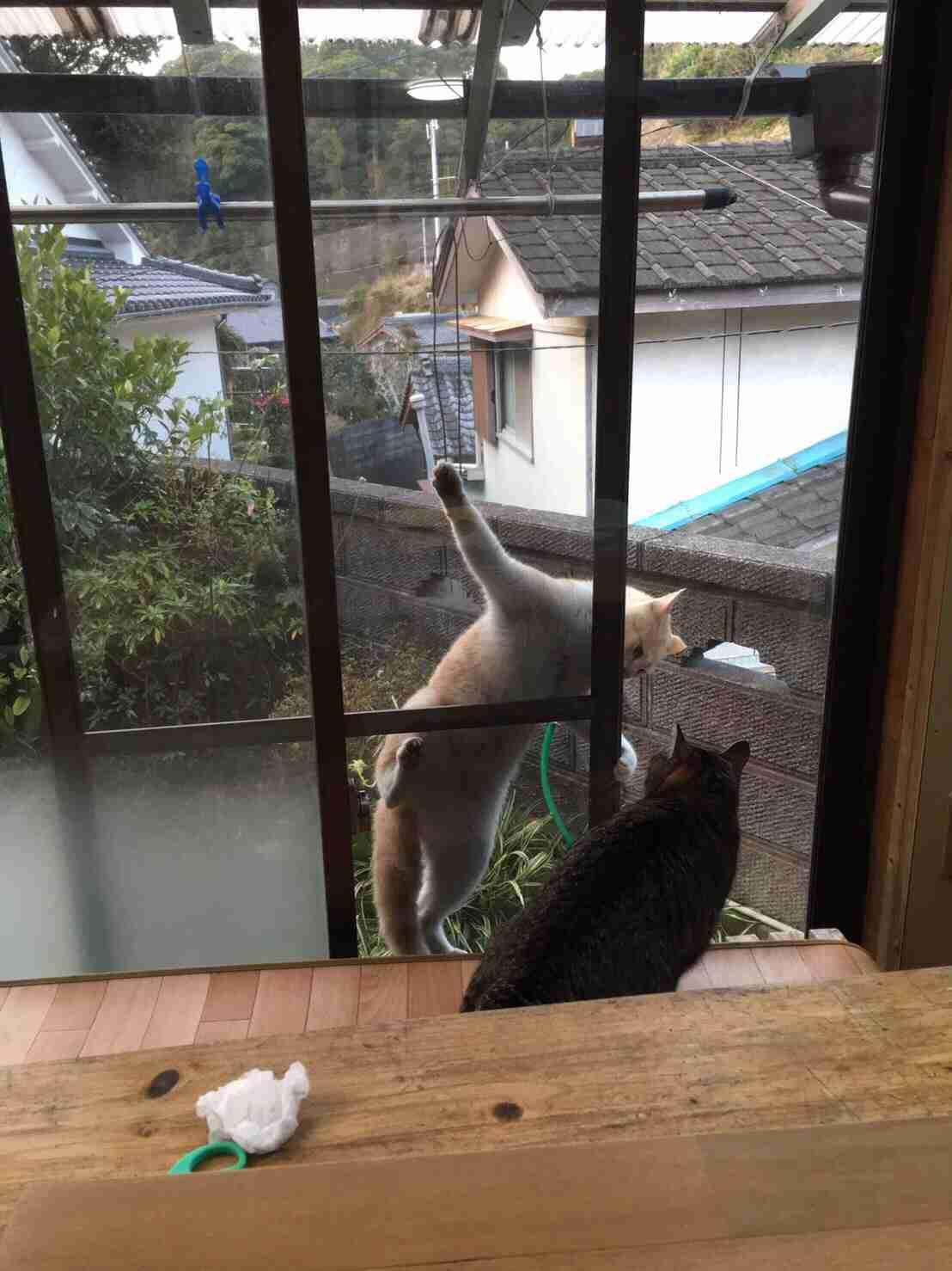 【画像】猫のお腹が見たい