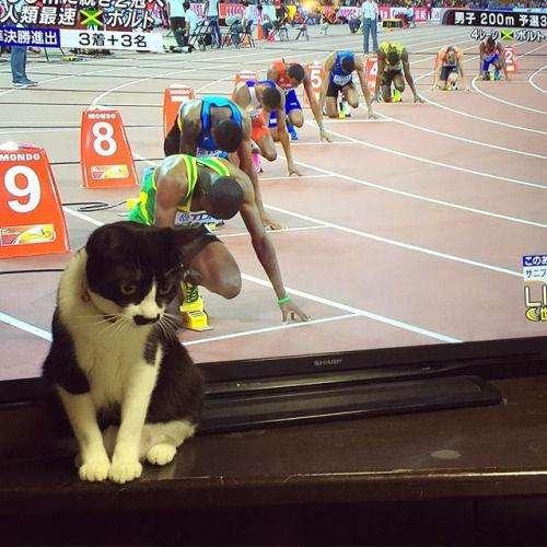 動物画像を貼って運動会開催するトピpart2