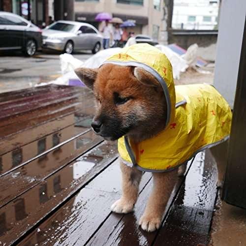 【三連休】雨の日の過ごし方
